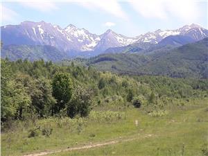 Teren de vanzare in Sibiu, zona de cabane Valea Avrigului